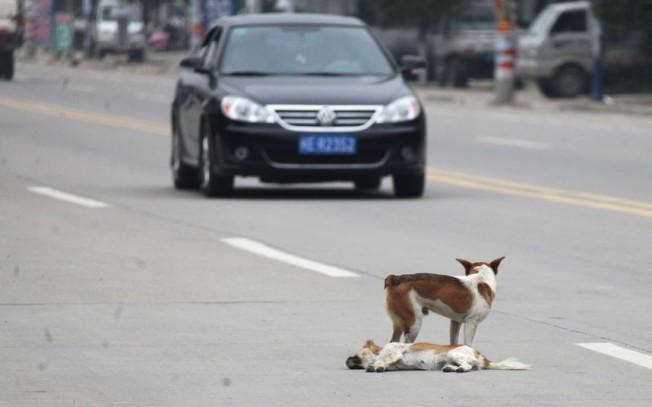 dead-dog_2432005k