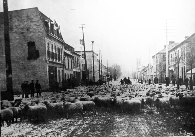 Sheep-herding-gore-and-foster-1893-644x455.jpg