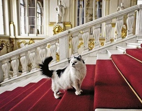 Cats-of-State-Hermitage-St.-Petersburg-2.jpg