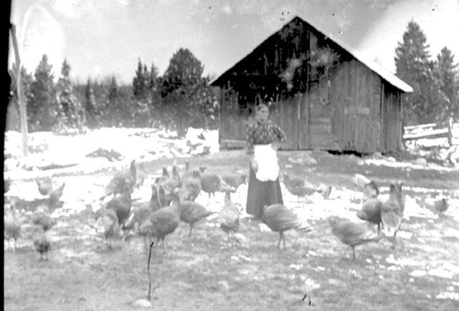 Mrs-Peacock-with-turkeys-644x436.jpg