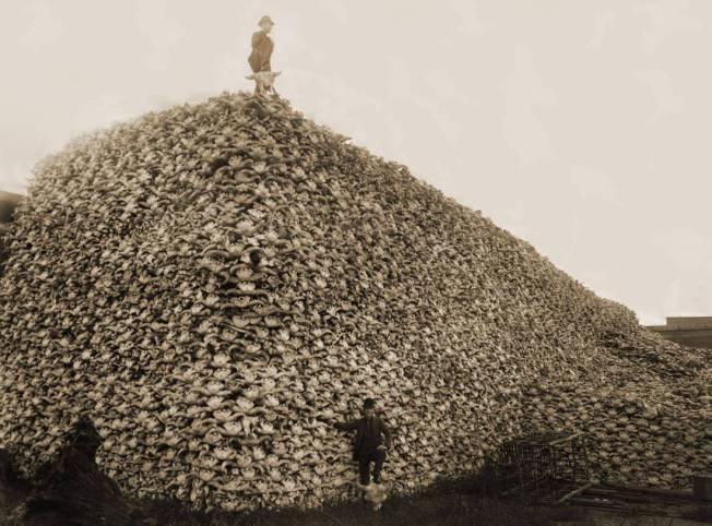 buffalo-extermination-01.jpg