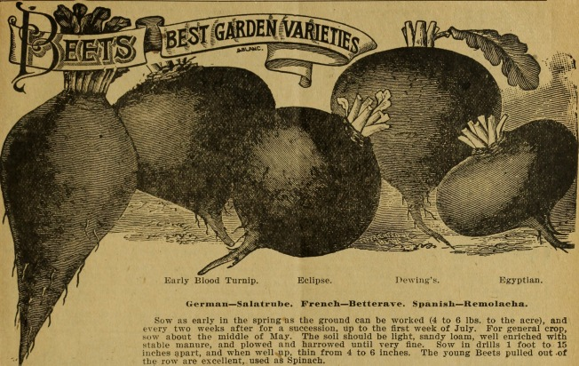 -Seed_annual-_-_vegetable_and_flwoer_seeds,_grass,_clover_and_field_seeds,_plants,_bulbs_and_roots_(1900)_(20561044505).jpg
