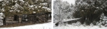 You Give me a Fever— Settler Swamp Fever