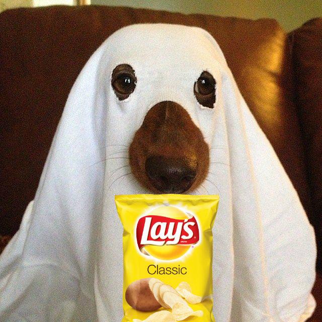 5e4e2088e755fb3f29094de0b8a7b2a9--pet-costumes-for-dogs-ghost-costumes