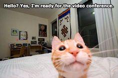 95ebe98509f70efbd7e88fcb0545018d--cat-selfie-funny-cats