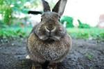 A Hare of a Story –Donald Munroe — HorstFallack